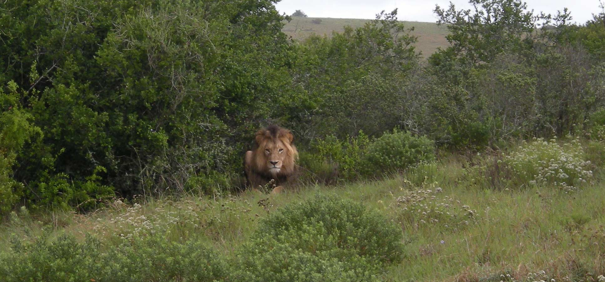 Travel Jimmy travel reviews Eastern Cape Safari South Africa